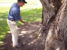 Golferhiitingtree.jpg