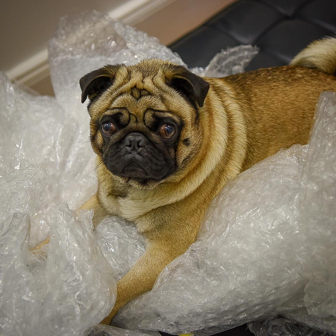 BubblewrapBarry